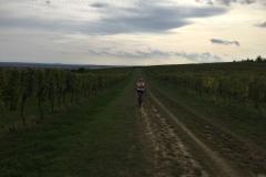 Cyklobobule 2019 -  zážitkové výlety moravskými vinicemi na kole