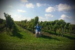 Cyklobobule 2020 - strašák ve vinici